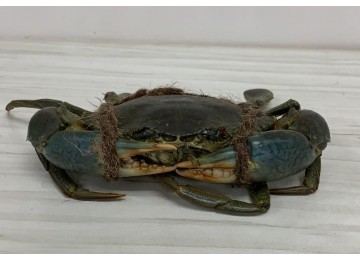 India / Sri Lanka L Crab (550 to 600 grams per piece)