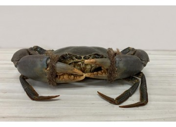 India / Sri Lanka XL Crab (750 grams to 800 grams per piece)