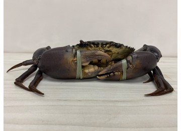 Indonesia XL Crab 750grams – 800grams