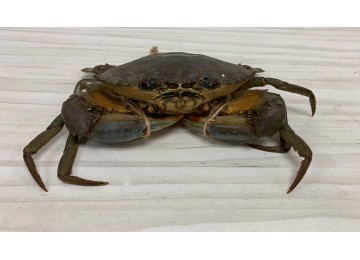 India / Sri Lanka MED Crab (300 to 450 grams per piece)