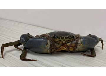 India / Sri Lanka XXL Crab (900 grams to 1kg per piece)