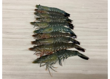Live / Chill Tiger Prawns (Per 1/2 kg)