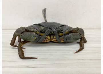 Philippines XL (Females/Roe Crab)